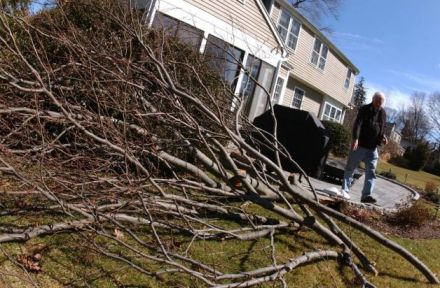 fallen tree clearing services