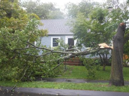 tree branch removal north shore massachusetts